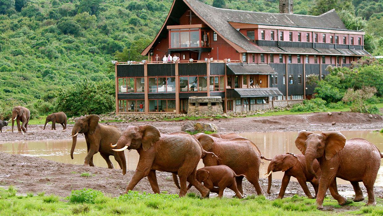 Elephants-walking-past-The-Ark