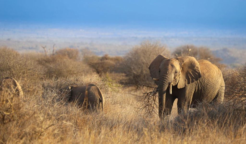 3 Days Explore Amboseli Safari