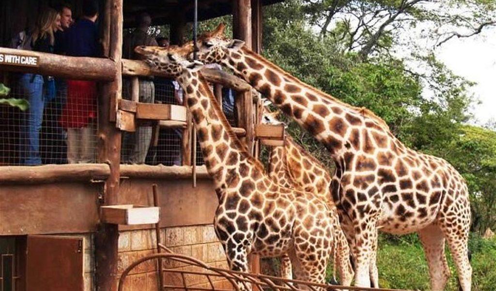 1-Day Top Nature Sights of Nairobi