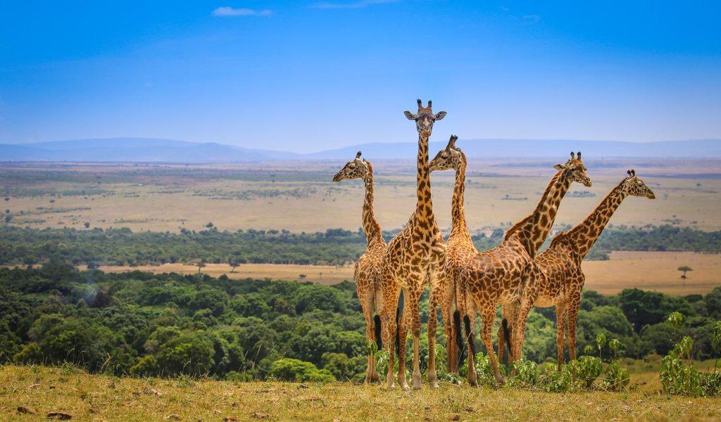 4 Days Masai Mara – Lake Nakuru Safari