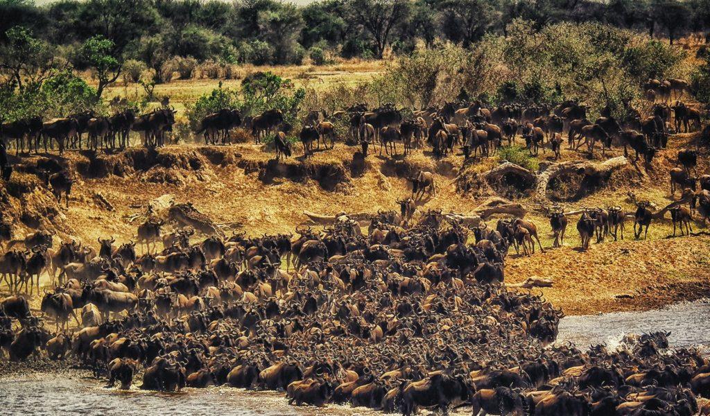 6 Days Maasai Mara – Lake Nakuru – Amboseli Safari