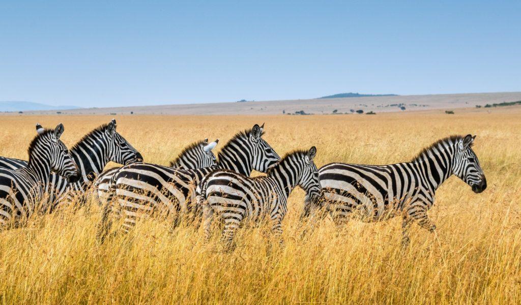 4 Days Best of Mara Flying Safari Package